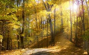 Обои солнце, Огайо, осень