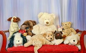 Обои игрушки, собака, диван