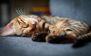 Картинка кот, спит, котёнок, котэ