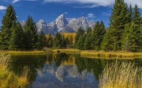 Картинка осень, лес, трава, деревья, горы, озеро, отражение, США, Wyoming, Grand Teton