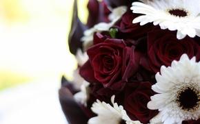 Картинка цветы, макро, бордовый, букет, герберы, белый, розы