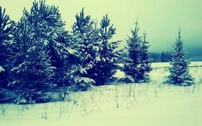 Картинка природа, елки, Лес