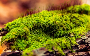 Картинка трава, макро, природа, мох