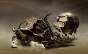 Картинка пустыня, черепаха, desktopography