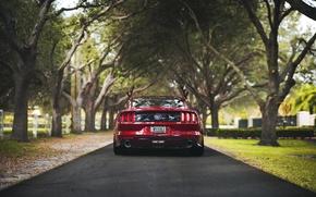 Картинка деревья, забор, дороги, Mustang, Ford, сзади, задний фонарь, фермы, выхлопные газы автомобилей