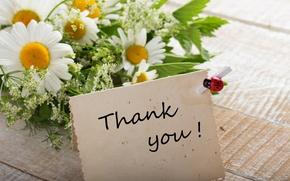Картинка ромашки, букет, flowers, thank you