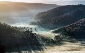 Картинка свет, туман, утро
