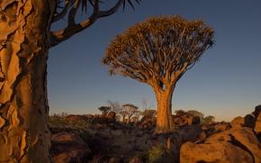 Картинка небо, деревья, пейзаж, закат, камни, Африка, Намибия