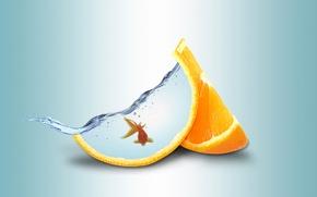 Картинка вода, апельсин, золотая рыбка