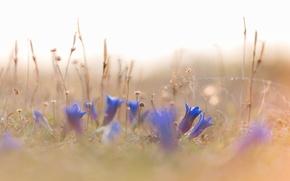 Картинка трава, цветы, природа