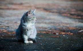 Картинка кошка, фон, улица