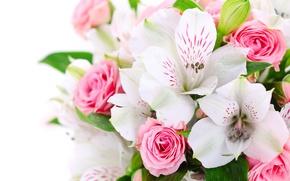 Обои цветы, букет, розовые, орхидеи, розы, белые