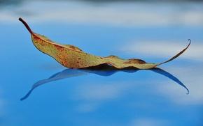 Картинка осень, лист, отражение