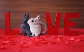 Картинка праздник, Love, кролики