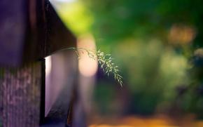 Картинка трава, макро, забор