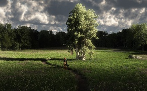 Картинка лес, трава, девушка, цветы, тучи, природа, дерево, арт, тропинка, полевые, путник, солнечные лучи, лютня