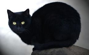 Картинка кошка, взгляд, камень, черный кот
