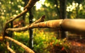 Картинка листья, макро, деревья, природа, фон, дерево, widescreen, обои, забор, размытие, ограждение, деревянный, wallpaper, широкоформатные, листики, …