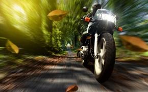 Картинка осень, листья, природа, скорость, мотоцикл, шлем, мотоциклист