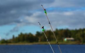 Картинка лес, фон, отдых, рыбалка