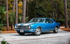 Картинка Chevrolet, Camaro, Classic, 1968, z28