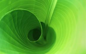 Обои Виток, Листок, Зелень