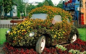 Картинка цветы, жук, сад, клумба, задумка