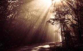 Картинка forest, road, sunlight, beams, sepia