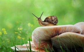 Картинка зелень, трава, грибы, улитка, боке