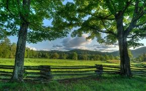 Картинка деревья, забор, луг, New York, штат Нью-Йорк, Адирондак, Adirondack
