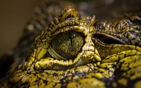 Картинка green, eye, crocodile