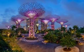 Обои пальмы, парк, сад, деревья, Gardens by the Bay, огни, ночь, Сингапур, дизайн