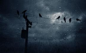 Картинка капли, ночь, провода, вороны