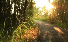 Картинка Grass, road, trees, sunlight