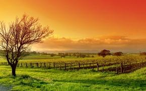 Картинка поле, небо, облака, пейзаж, природа, дерево