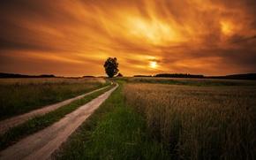Картинка дорога, поле, закат