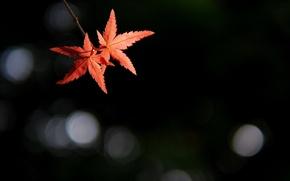 Картинка листья, блики, фон, ветка