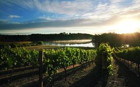 Картинка небо, солнце, облака, река, Франция, виноград, виноградники
