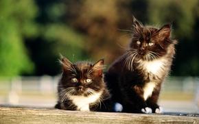 Картинка кошка, кот, котенок, киска, двое, киса, cat
