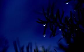 Обои ночь, ветка, синий, капля
