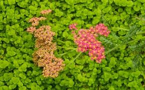 Картинка цветок, трава, цветы, widescreen, обои, wallpaper, широкоформатные, background, обои на рабочий стол, полноэкранные, HD wallpapers, …