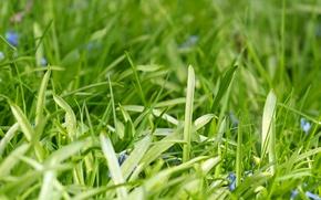 Картинка зелень, утро, травка, боке
