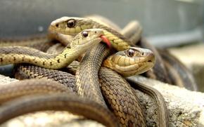 Картинка язык, змеи