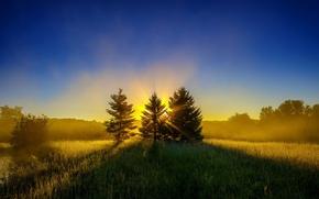 Картинка лес, солнце, лучи, восход, поляна, елки