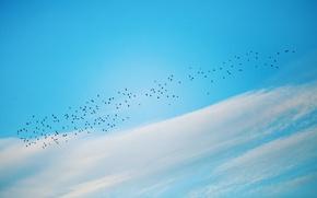 Обои минимализм, птицы, небо, природа