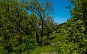 Картинка зелень, лето, небо, трава, солнце, деревья, ручей, США, кусты, Austin, Texas