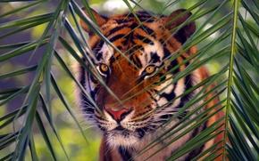 Обои животные, тигр, ветка, Bengal Tiger