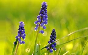 Картинка поле, трава, природа, лепестки, луг