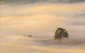 Картинка деревья, туман, дерево, утро