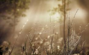 Обои лето, утро, свет, туман, путина, макро